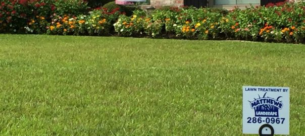 lawn care shreveport from Matthews Landscape